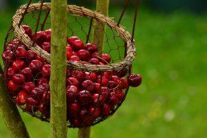 Sodininkystė: svarbiausi privalumai sveikatai