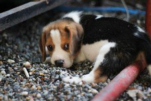 """Naujas sukčiavimo būdas – prašyti paramos """"surastiems"""" gyvūnams"""