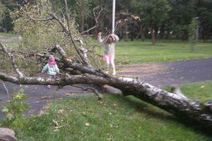 Užfiksavo Ramybės parke išvirtusį didžiulį medį: laiko klausimas, kada nukris ir kiti