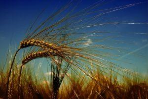 Lietuvos žemės ūkis žengia inovacijų link: kas palengvins prekybos mainus?