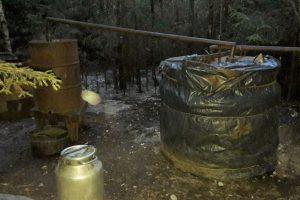 Rietavo miške rasta naminės degtinės varykla
