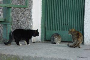 Uostamiestyje siekiama užtikrinti gyvūnų kontrolę
