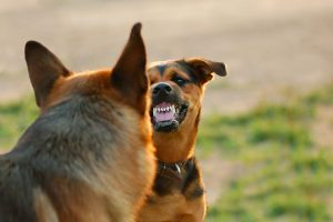 Klaipėdiečius baugina agresyvus šuo