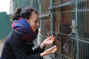 Gyvūnų prieglaudai – sunkūs laikai