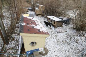 Katėms uostamiestyje – nauji apartamentai