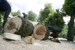 Dėl saugotinų medžių ir krūmų – nauji kriterijai