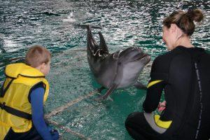 Delfinų terapijos centre – ne tik delfinai
