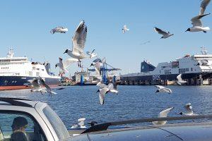 Chaosas patogių vėliavų laivuose
