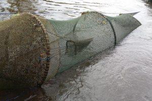 Nedrausmingi žvejai Klaipėdos krašte patys žvejojami pareigūnų