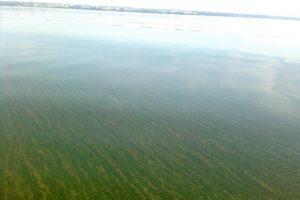 Dusios ežeras tapo panašus į dvokiančią pelkę