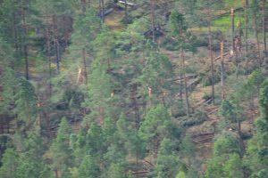 Audros padariniai Dzūkijos miškuose prilygsta stichinei nelaimei