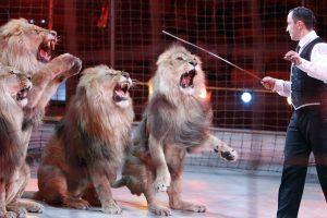 Latvijoje ketinama uždrausti laukinių gyvūnų naudojimą cirke