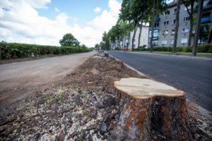 Po protestų Kauno valdžia keičia poziciją – medžių dėl rekonstrukcijos nebekirs