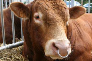 Bulius mirtinai sužalojo mėsos perdirbimo įmonės darbuotoją