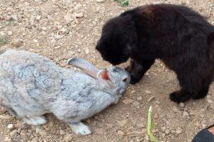 Kretos triušis – katės Lisos gerbėjas