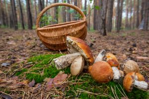 Įspėjimas: kartu su grybais iš miško neparsineškite baudos
