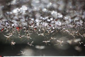 Upinių kraujasiurbių mašalų naikinimui – mažiau lėšų nei pernai