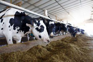 EP pritarė siūlymui riboti antibiotikų naudojimą žemės ūkyje