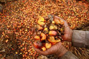 Palmių aliejaus produktų sudėtyje lietuviai neieško