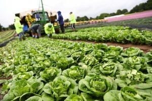 """Kodėl britų ūkininkai po """"Brexit"""" bijo prarasti darbuotojus iš Rytų Europos?"""