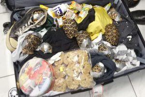 Filipinų oro uoste konfiskuoti per 1,5 tūkst. retų vėžlių