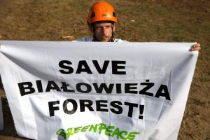 Lenkijos aktyvistai protestuoja prieš kirtimus Belovežo girioje