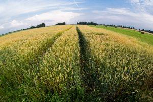 VMI primena: žemės savininkams – paskutinė diena sumokėti mokestį