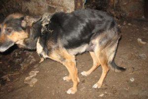Lazdijų rajone išgelbėtas šuo jau sveiksta