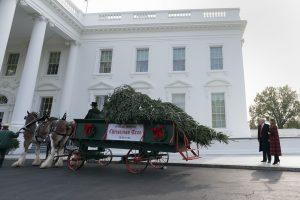 Į Baltuosius rūmus atkeliavo Kalėdų eglė