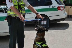 Policijos šuo aptiko dingusio senuko kūną