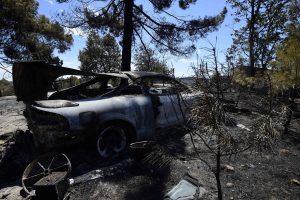 Portugalijoje bus ribojamos eukaliptų giraitės, siekiant sumažinti gaisrų riziką