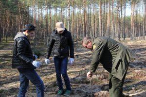 Per nacionalinį miškasodį žadama pasodinti 0,5 mln. medelių
