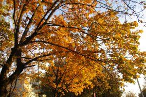 Gamtininkai nepamena tokios šiltos lapkričio pradžios