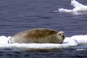 Ekspertas: ne tik Rusija gali užsimanyti Arkties