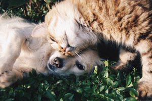 Tyrimas: Šiaurės Lietuva dievina šunis, likusi jos dalis – kates