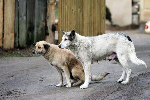 Seime – pasitarimas dėl gyvūnų ženklinimo