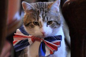 Kaip gyvena du svarbiausi Didžiosios Britanijos katinai?