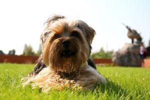 Klaipėdietis nuteistas už žiaurų elgesį su šunimi