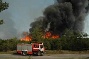 Bus renkamos lėšos gaisro nuniokotai Kuršių nerijai sutvarkyti