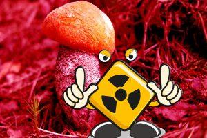 Miškuose – radiacinė šmėkla?