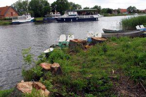 Dėl medžių – šešeri metai teismuose