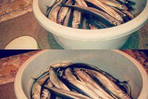 Žvejams – optimistinės prognozės