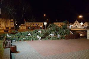 Kalėdų eglę paguldė vėjas