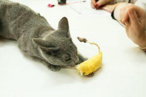 Kilmingų kačių būrys džiugina kauniečius