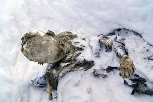 Ant aukščiausio Meksikos kalno – apsikabinusių žmonių mumijos