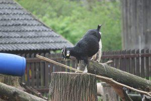 Magiškas Zoologijos sodo sezono atidarymas