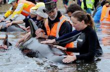 Naujojoje Zelandijoje banginių krizė jau pasibaigė