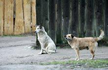 Šalta, todėl šunys laksto vieni