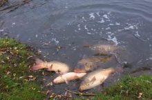Pakruojis skelbia ekstremalų įvykį dėl gaištančių žuvų