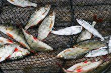 Minijoje Plungės rajone gaišo žuvys